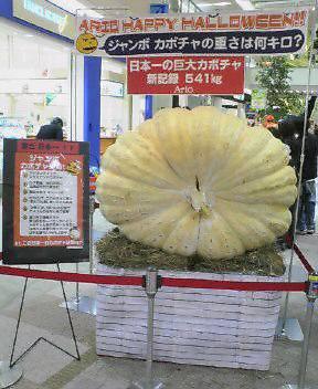 おっきなかぼちゃ